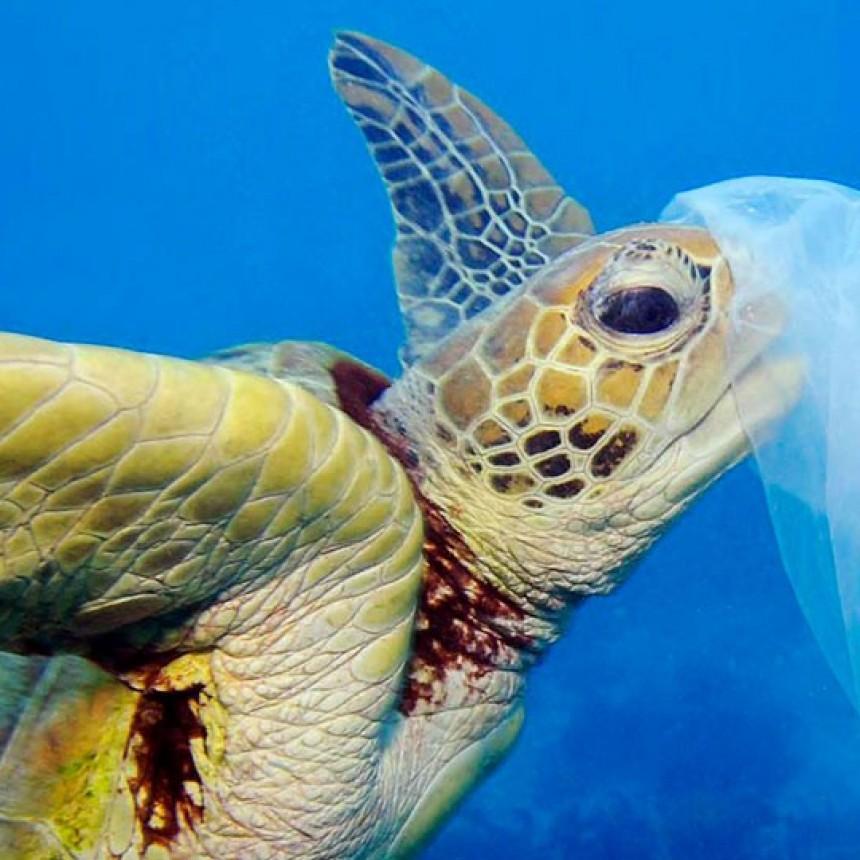 Columna de Cuidados del Ambiente. Hoy: Semana para la reflexión