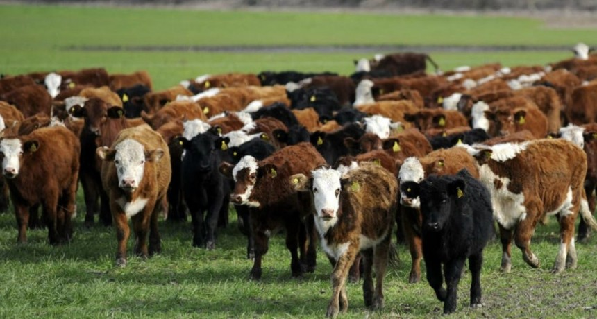 La Pampa. Advierten sobre casos de carbunclo